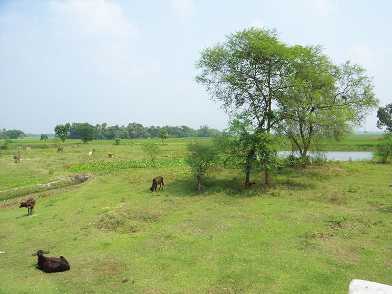 のどかな村の一角にある工場。まわりには美しい草原が広がります。